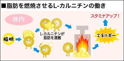カルニチンと脂肪燃焼の仕組み この画像はこちらのHPより転載させていただきました。